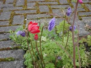 Spring in Halton