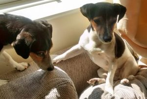 dogs in Bath